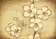 サンプル画像 桜